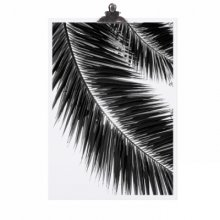 Poster A4 - Palm Leaf